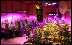 Lumens per plant
