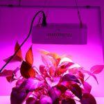 How Many Lumens Do LED Grow Lights Produce?
