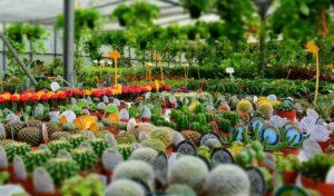 Choosing plant