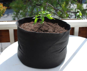 Plant fertilizer