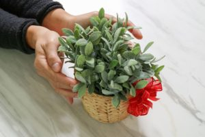 Loving plants